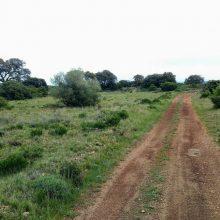 piste forestiere entre champ de tir et Treille