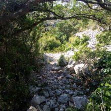 sous la canope du ruisseau de Feuilla